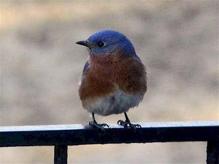 SydorP1100120-BlueBirdFront