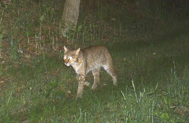 BobCat2Wiley May 152009CDY_0019